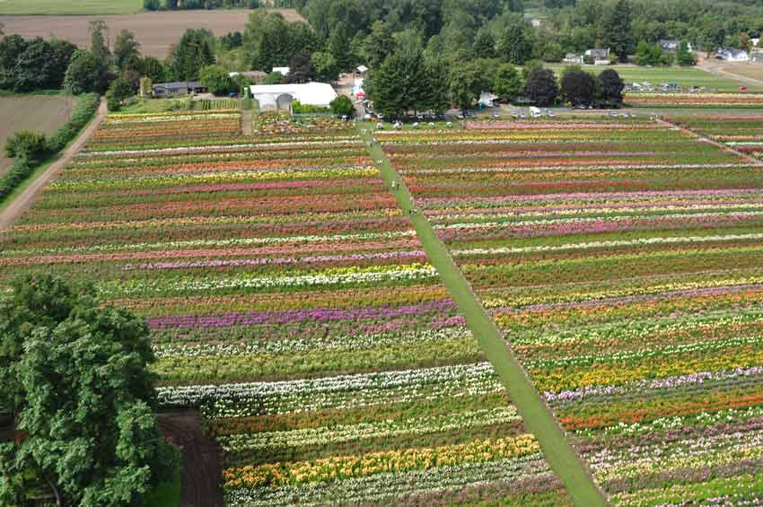 aerial-agriculture-photography-company-oregon